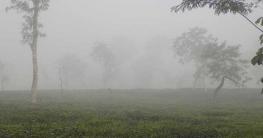 শ্রীমঙ্গলের তাপমাত্রা ১৩ দশমিক ৬ ডিগ্রি, শীতে বিপর্যস্ত চা শ্রমিক